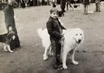Lohjan näyttely 1978. Lapsi ja koira -kilpailun hopeapari, 9-vuotias Tuuli Hiekkanen ja pyreneittenkoira Tonni.